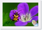 Italy-Fauna * Fauna of Italy. Butterflies, Moths, Insects, Beetles and other fauna of Italy. * (21 Slides)