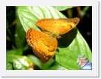 India-Kerala-Butterflies * Butterflies of Kerala and India * (46 Slides)