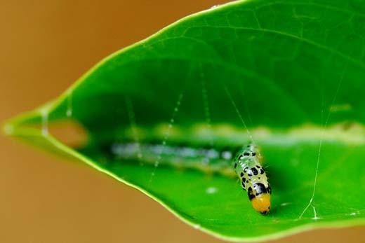 caterpillar stitching